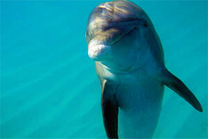 Jojo the dolphin in the Turks and Caicos