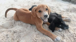 Potcake Place puppies in Turks and Caicos