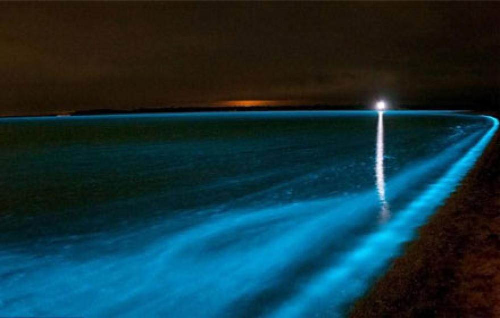 Bioluminescent Bay